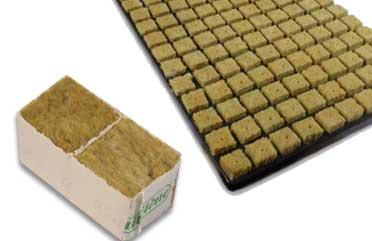germinar semillas en lana de roca