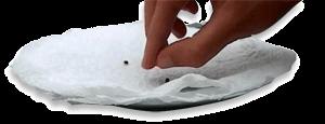 germinar semillas en plato