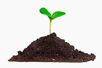 brote-de-semilla-en-tierra