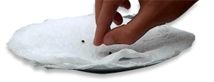 germinacion-plato