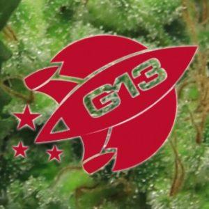 semillas g13 hash plant feminizadas