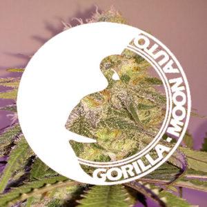 gorilla glue auto - gorilla moon auto