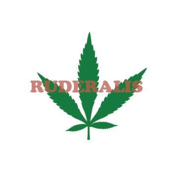 hoja de cannabis ruderalis