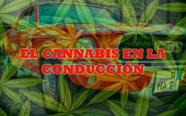 cannabis en la conducción